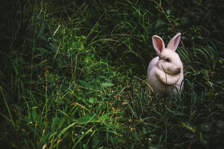 rabbit_unsplash