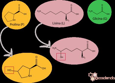 aminoacidos-colageno