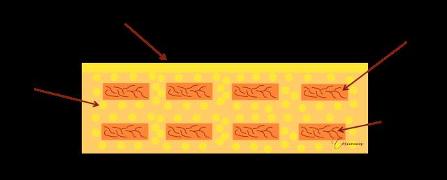 estrato-corneo-piel