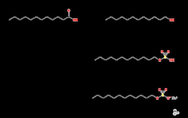 sintesis-sodium-lauryl-sulfate